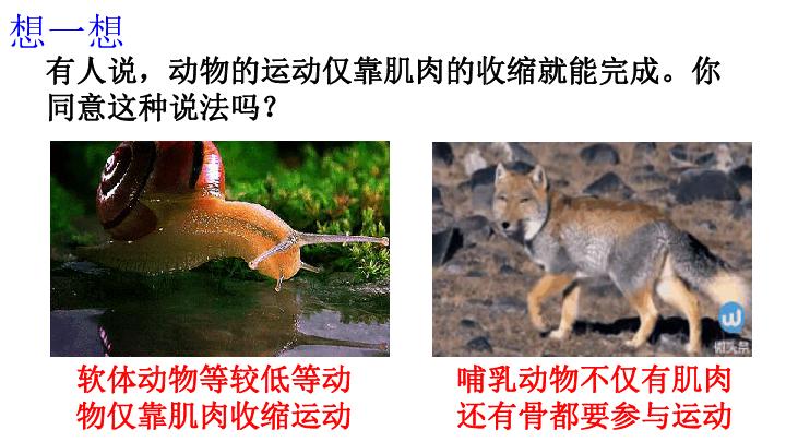 动物的运动课件 19PPT