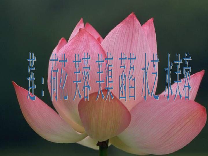 语文七年级上北京课改版6.22 爱莲说 共48张PPT