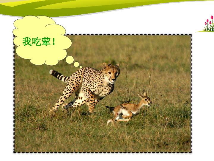北师大版八年级上第16章第2节动物行为的主要类型 共64张PPT
