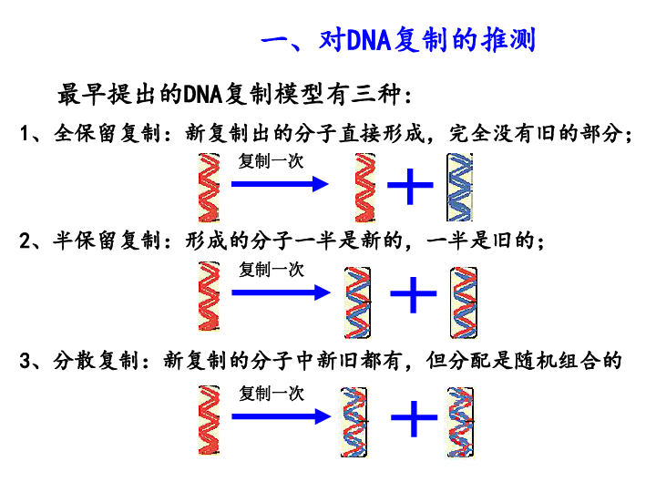 DNA分子复制 17PPT