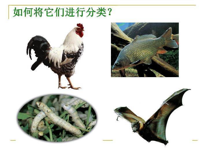 第4节 常见的动物 第3课时
