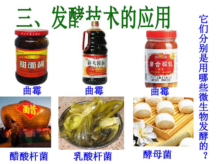 乳酸菌的发酵原理_畅诺