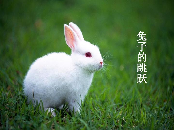 5.2.1动物的运动课件 28张PPT