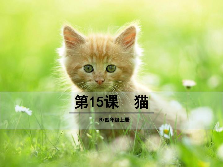 猫课件 共37张PPT