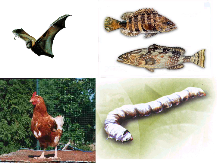 2.4常见的动物