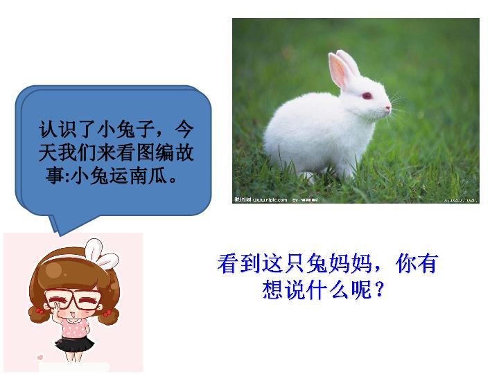 课件口语交际 小兔运南瓜