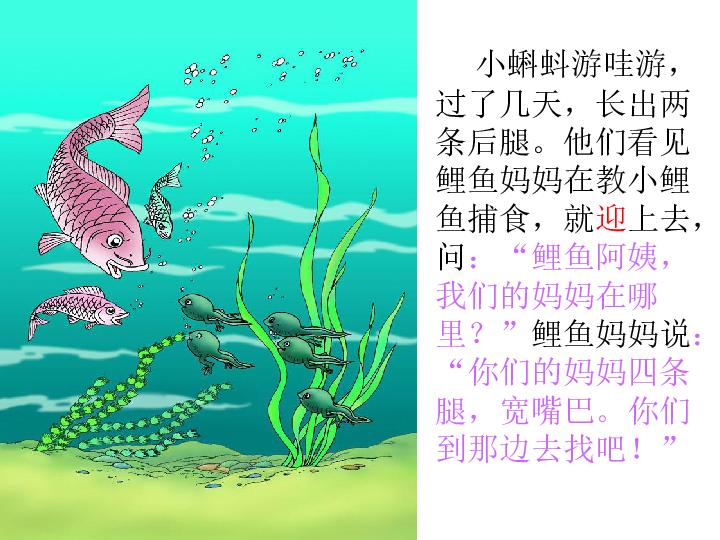 一年级下册 小蝌蚪找妈妈