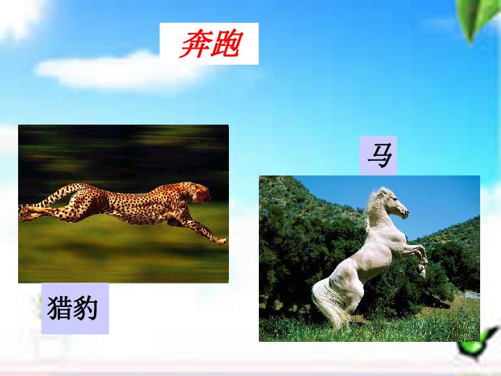 人教版八上第五单元第二章第一节动物的运动 共25张PPT