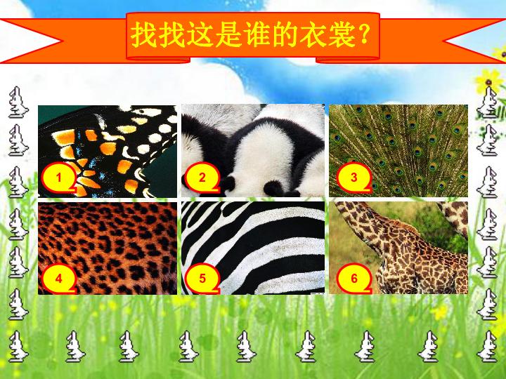 """11.动物的""""花衣裳"""" 课件"""