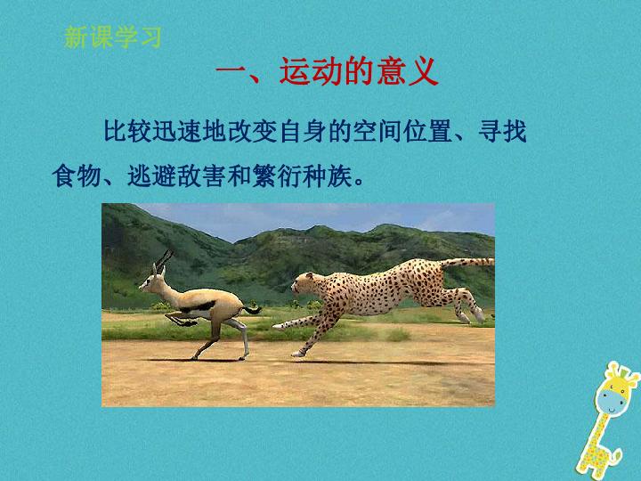 2.2.3 动物的运动 新版 济南版 23张PPT