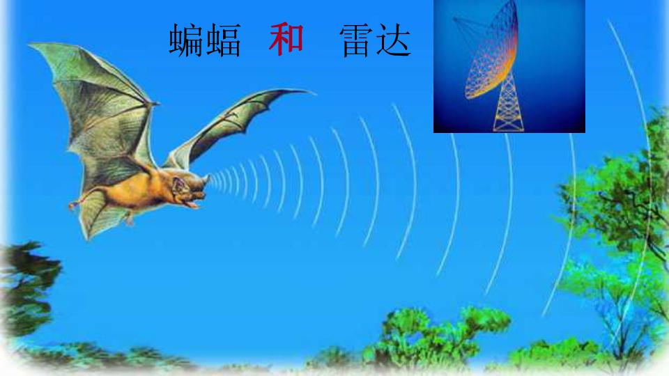 蝙蝠和雷达课件