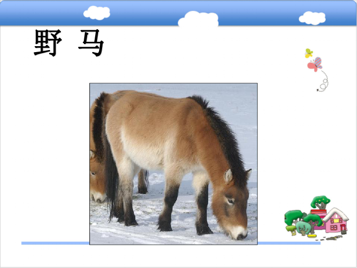 七年级生物上册 第四章 多种多样的动物 我国的珍稀动物 课件 新版 冀教版 35张PPT