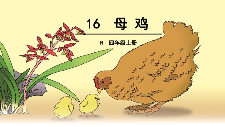 母鸡课件 共33张PPT