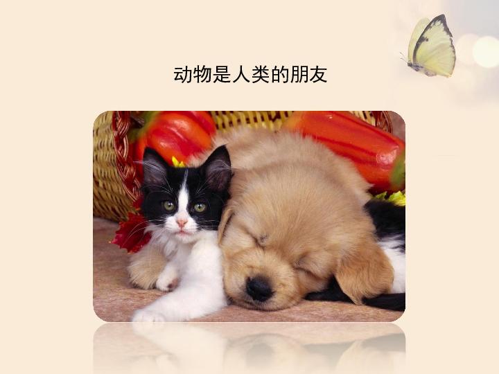 17.2我国的动物资源及保护 (共24张ppt)