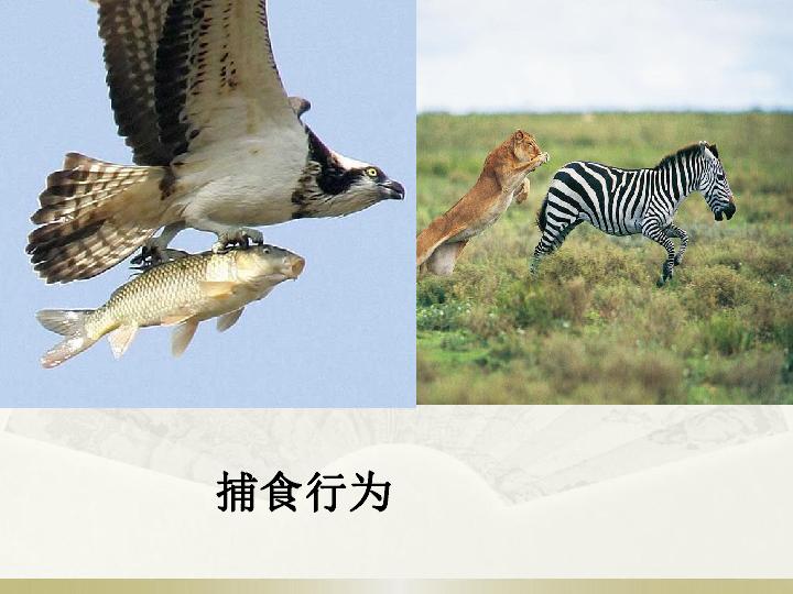 5.2.1动物的运动 共38张PPT