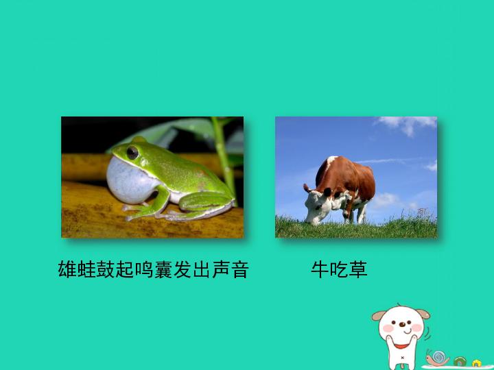 2.2.4 动物的行为 25张PPT