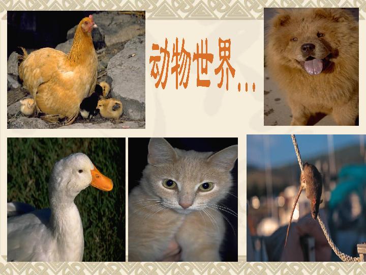 2016秋湘教版科学三上2.2 常见的动物 ppt课件
