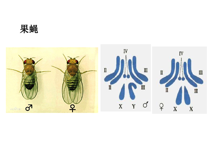 遗传与进化 第1课时 16张ppt