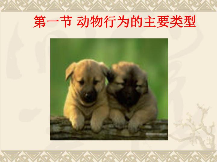 6.18.1动物行为的主要类型 共49张PPT