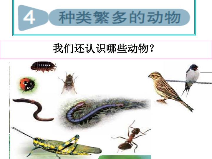 种类繁多的动物课件 (共19张ppt)