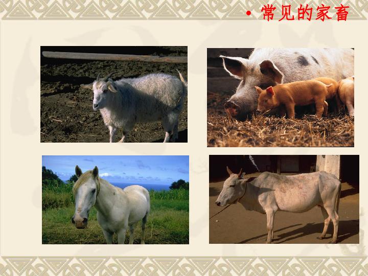 学三上2.2 常见的动物 ppt课件