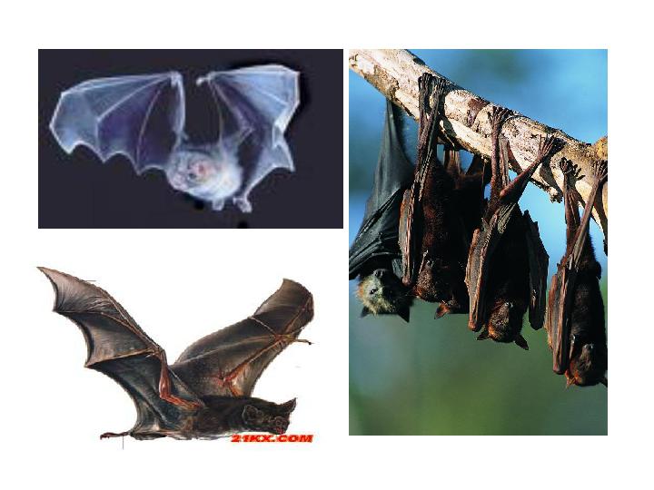蝙蝠和雷达
