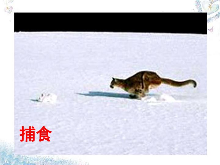 6.18.2动物行为的生理基础 共28张PPT