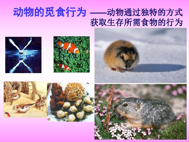 16章第2节 动物行为的主要类型课件 共94张PPT