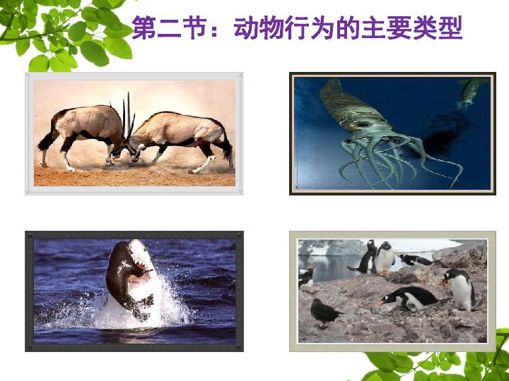 动物行为的主要类型 20张PPT