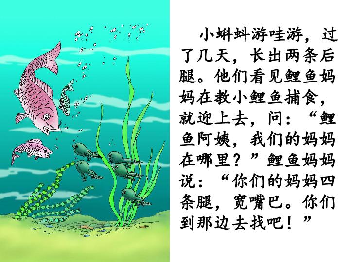 2017 2018学年语文 人教版 二年级上册同步教学课件 1 小蝌蚪找妈妈