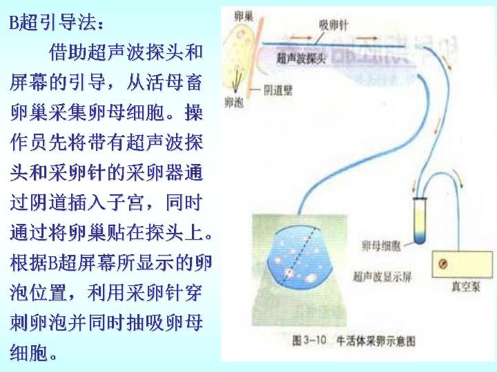早期胚胎培养的原理_人教版生物选修三3.2 体外受精和早期胚胎培养 教学设计