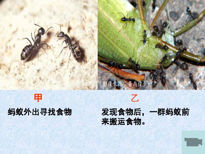 第16章第2节动物行为的主要类型 共55张PPT