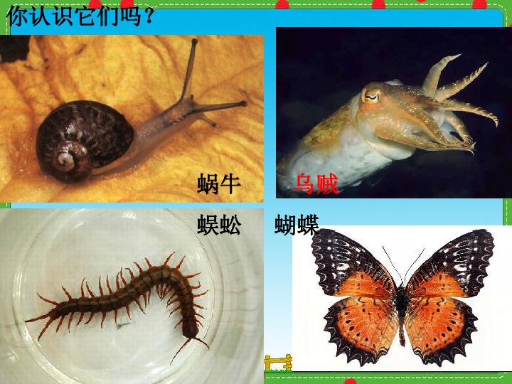 第三节 软体动物和节肢动物 课件 共32张PPT