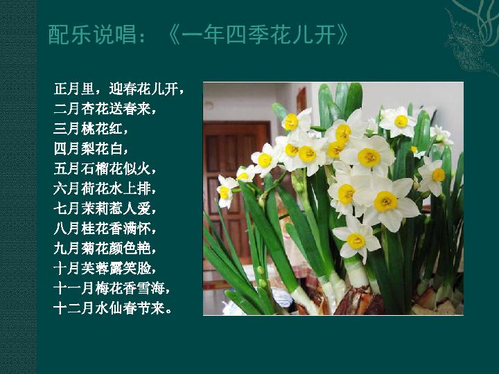 13 会变的花 树 叶课件