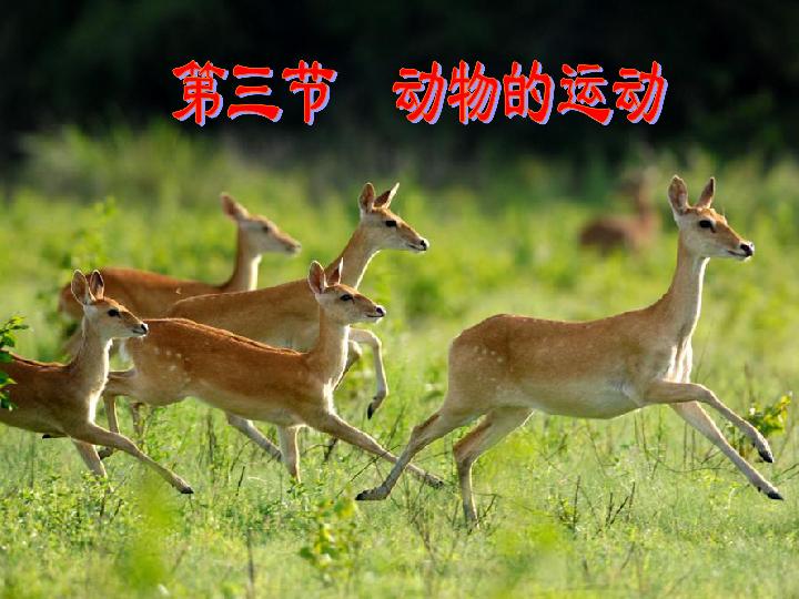 2.2.3 动物的运动 21张PPT