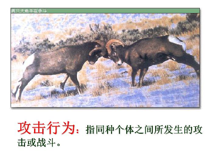 济南版七年级生物上册课件 第二单元2.4动物的行为 共30张PPT